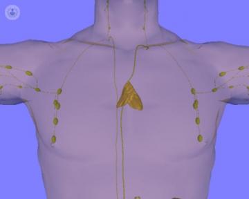 thymus-gland